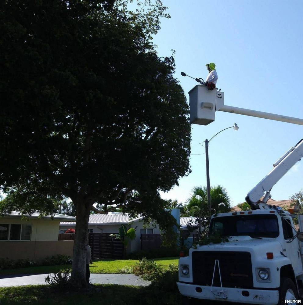Your Personal Tree Service